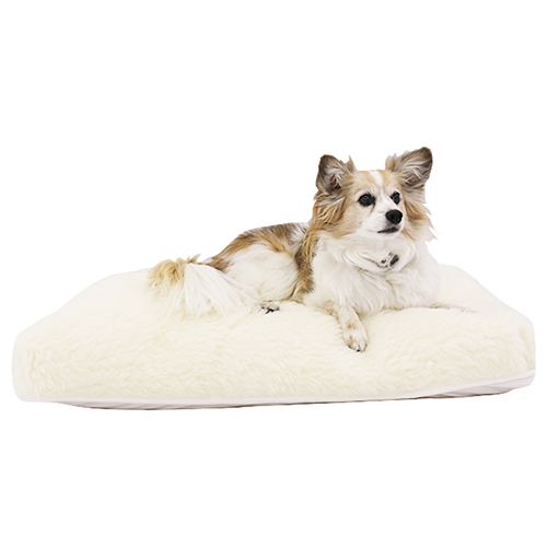 Pet Bed with Dog